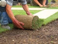 Рулонний газон — плюси і мінуси