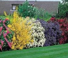 Декоративні чагарники та огорожі для саду