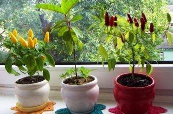Квіти і зелень на кухні