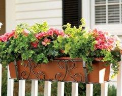 Цветы в керамических горшках: зимнее время, хранение на балконе