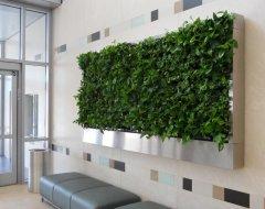 Вертикальное озеленение в интерьере: преимущества и виды